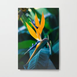 A Beautiful Flower Metal Print