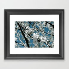 Almond Blossom Framed Art Print