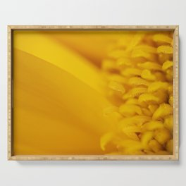 Macro Photo of a beautiful Sunflower. Serving Tray