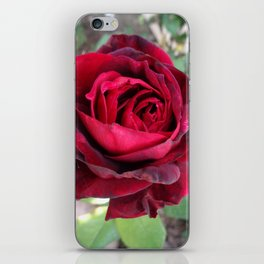 Portrait of a Rose iPhone Skin