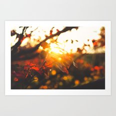 Beaming Fall Art Print