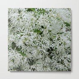 TEXTURES: White on Green Metal Print