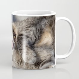 CAT - YAWNING - PHOTOGRAPHY - ANIMALS - CATS Coffee Mug