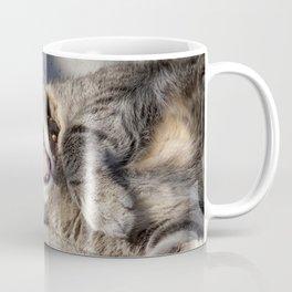 CAT - YAWNING - PHOTOGRAPHY - ANIMALS - CATS Coffee Mug