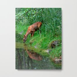 Little roe deer Metal Print