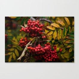 Bright Autumn III Canvas Print