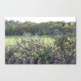 Birds in a tree.  Canvas Print
