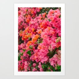 California Blooms VIII Art Print