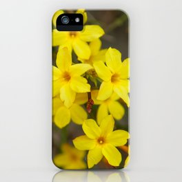 Winter jasmine or Jasminum nudiflorum deciduous shrub blooming with yellow flowers in early spring iPhone Case