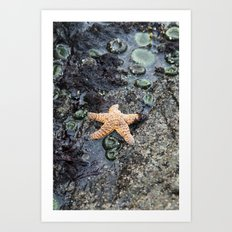 Starfish - La Push Art Print