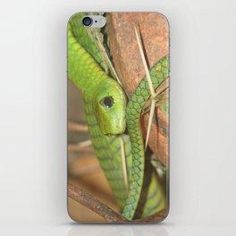 Green viper iPhone Skin