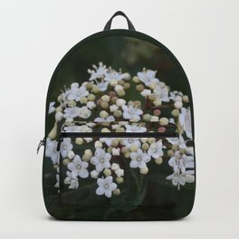 Viburnum tinus flowers and buds Backpack