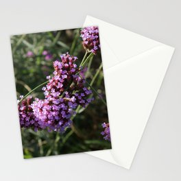 Cornwall Flower Garden Photo 1784 Magenta and Green Stationery Cards