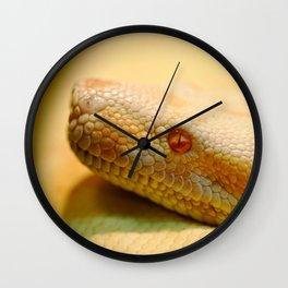 Albino Indian python Wall Clock