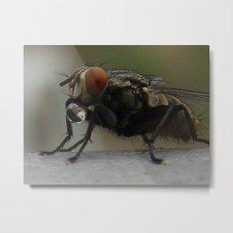 fly drinking water droplet Metal Print