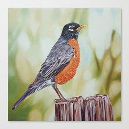 American Robin - bird painting Canvas Print
