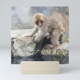 Young Snow Monkey Mini Art Print