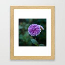 Summer Ball Framed Art Print