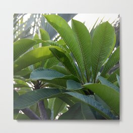 Frangi Leaves Metal Print