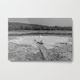 Geyser in background Metal Print