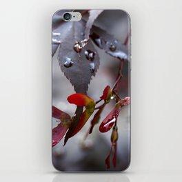 Japanese Maple Seeds II iPhone Skin