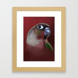 Yellow - Sided Green Cheek Conure Parakeet Framed Art Print