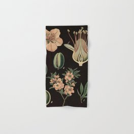 Botanical Almond Hand & Bath Towel