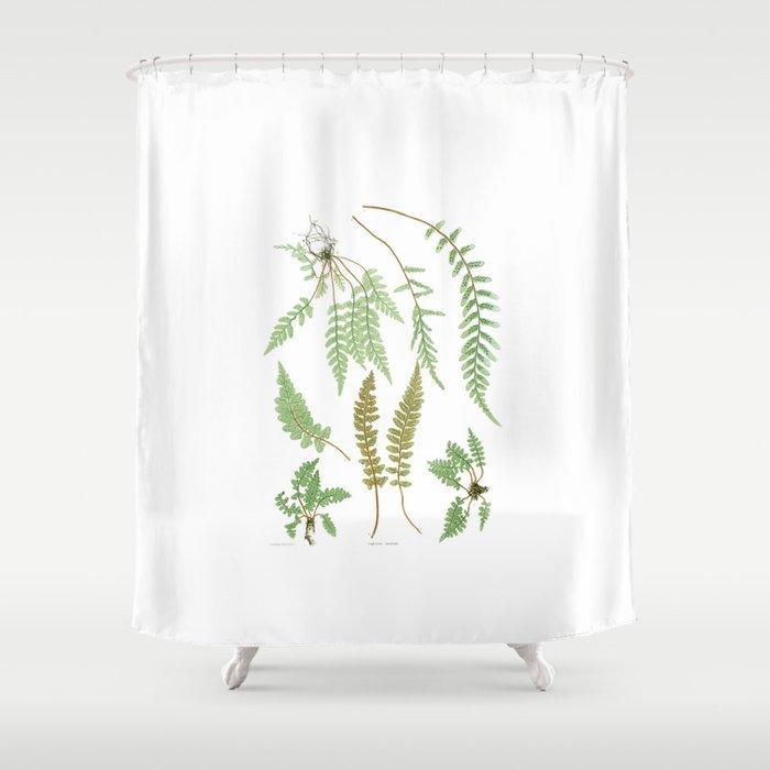 Fern Plants Illustration - Vintage Shower Curtain by lostuniverse ...