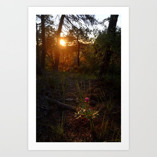"""Flower Into The Woods"" Happy Peony looking for the last sun.. Art Print"