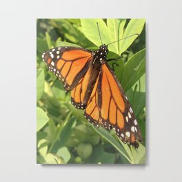 The Monarch Flight Metal Print