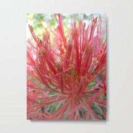 Blood Lily Metal Print