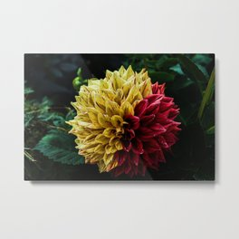 Yellow Red Metal Print