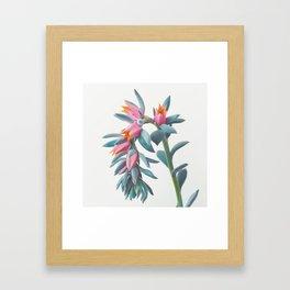 Succulent Cluster Framed Art Print