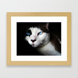 Cat siamese blue eyes Framed Art Print