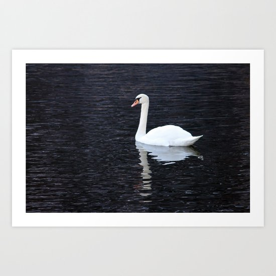 """Swan and Shadow"" Hallstatt, Austria Art Print"
