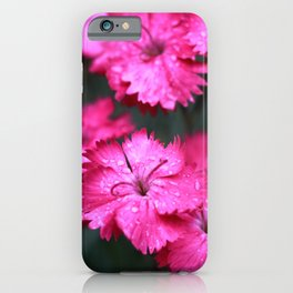 Pink Dianthus with Raindrops 3 iPhone Case