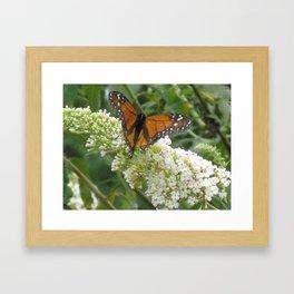 Monarch on Butterfly Bush Framed Art Print