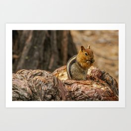 The Squirrel and the Redwood Art Print