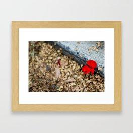 A Lonely Flower Framed Art Print