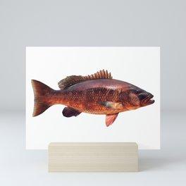 Cubera Snapper Mini Art Print