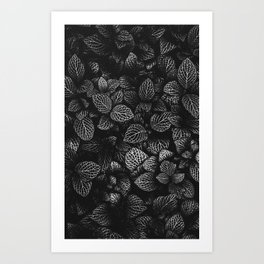 Unusual Bush Art Print