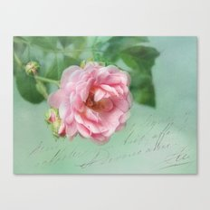 little pink rose Canvas Print