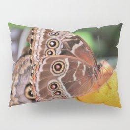 Morpho Butterfly Eating Lunch Pillow Sham