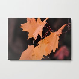 Colorful maple leaves Metal Print