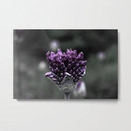 Violet Seedlings Metal Print