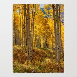 Autumn Aspen Forest Aspen Colorado Poster