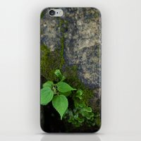 tennessee iPhone & iPod Skins featuring Tennessee Creek by The Magic of Nature & The True You