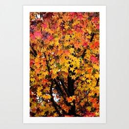 Autumn Maple Tree Art Print