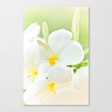White Plumeria 2 Canvas Print