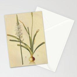 ornithogalum trigynu Redoute Roses m Stationery Cards